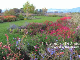 Il nostro catalogo piante aromatiche vendita online for Vendita on line piante ornamentali da giardino