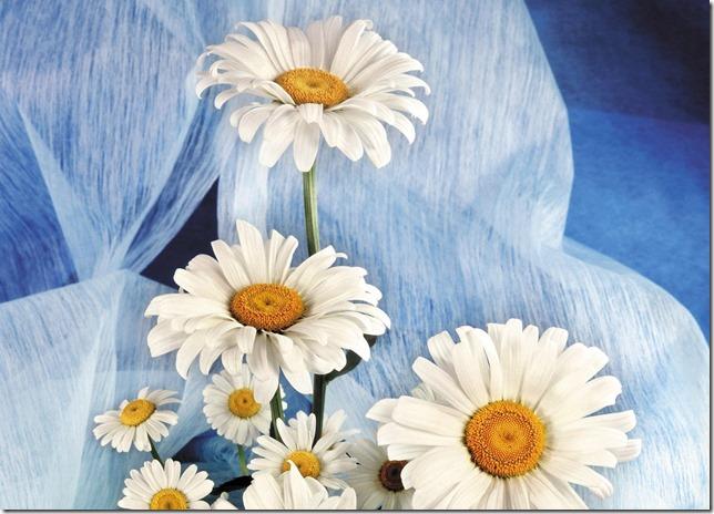 margaritas flores (4)
