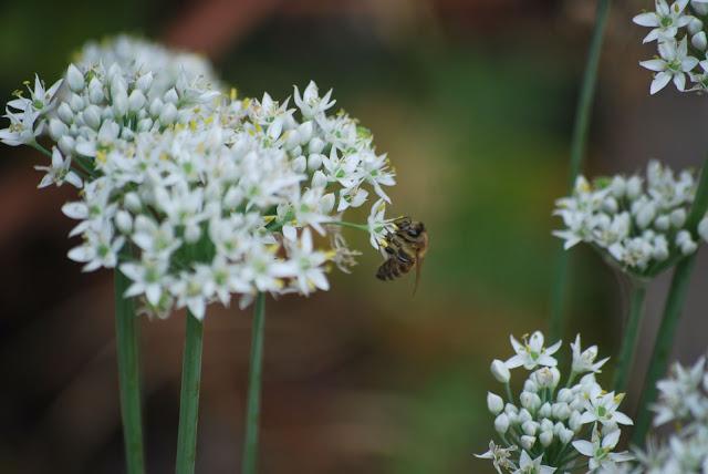 KI Spirits bees