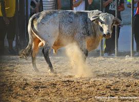 130-peña taurina linares 2014 539.JPG
