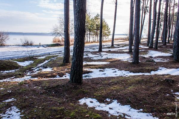 Вигляд на водосховище зі сторони лісу