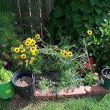 Gardening 2010, Part Three - 101_3819.JPG