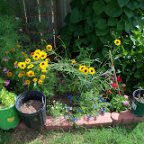 Gardening 2010, Part Three - 101_3819.JPG