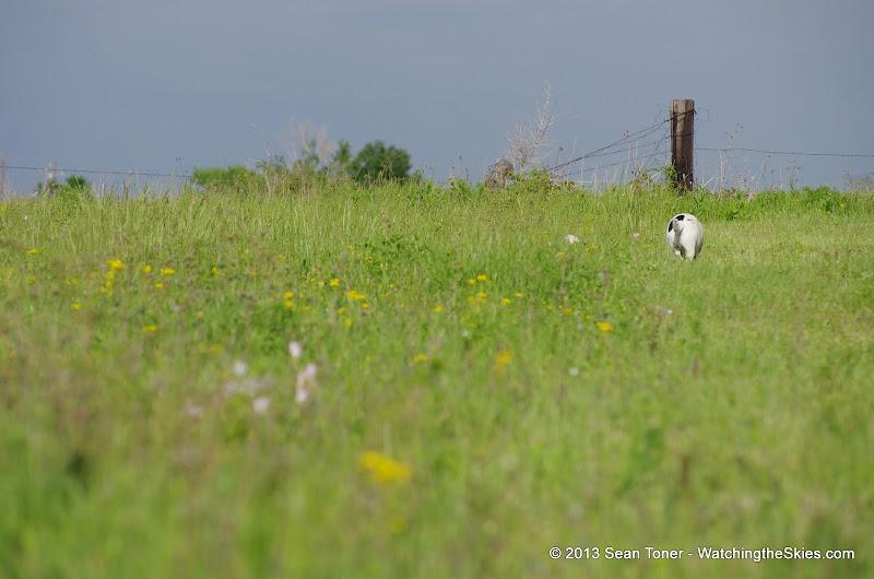 2013 Spring Flora & Fauna - IMGP6323.JPG