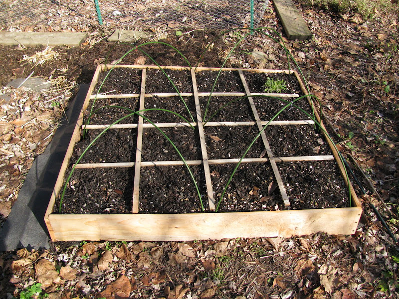 4x4 SFG cold frame experiment IMG_3532