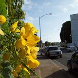 Hawaii Day 2 - 100_6509.JPG