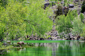 Beautiful & Colorful Naltar Lake, Naltar, Gilgit-Baltistan