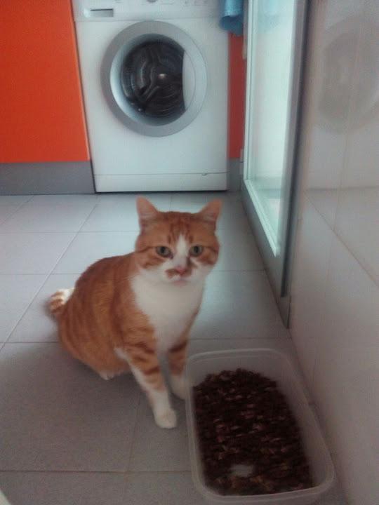 Tomas, gatito precioso busca familia nueva (Muy urgente) IMG-20160413-WA0065