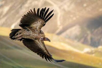 वो पक्षी जो शिकार नहीं करता   Birds Facts In Hindi