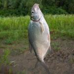 20160624_Fishing_Bakota_170.jpg