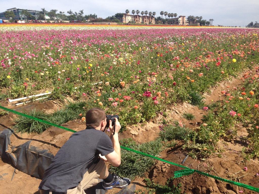 [Flower+fields+3%5B8%5D]