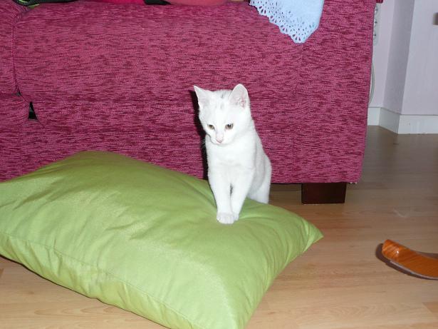 Zuri, cachorrita blanca requeteguapa busca papas.Alava. ¡ADOPTADA! Fotos%2B007