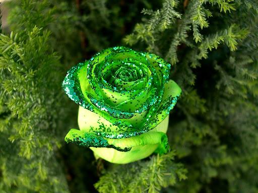 Green_rose.jpg