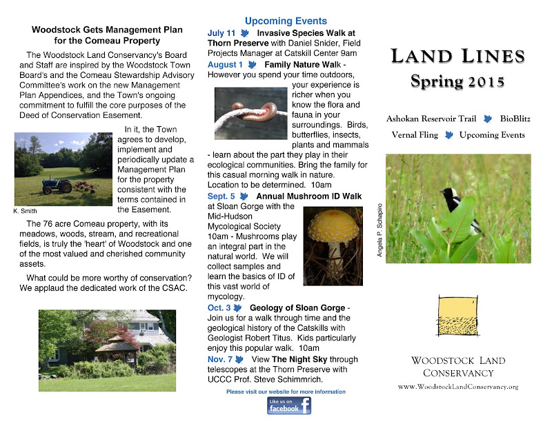 2015 spring News pg1