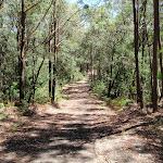 walking along trail west of lookout (237149)