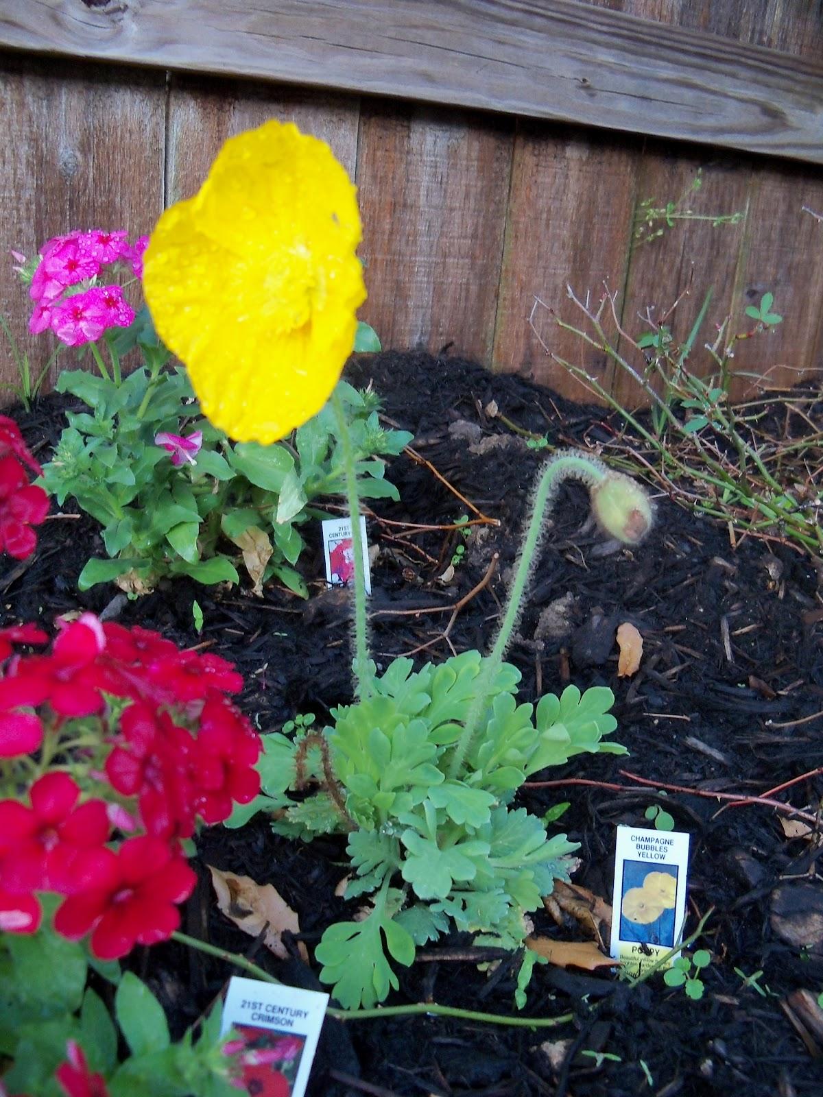 Gardening 2011 - 100_6743.JPG