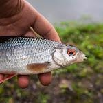 20140421_Fishing_Hodosy_005.jpg