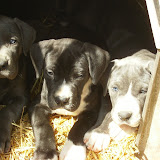 Star & True Blues February 21, 2008 Litter - HPIM1206.JPG