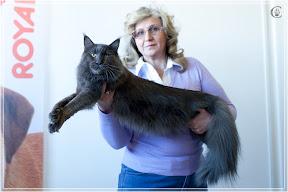 cats-show-25-03-2012-fife-spb-www.coonplanet.ru-036.jpg