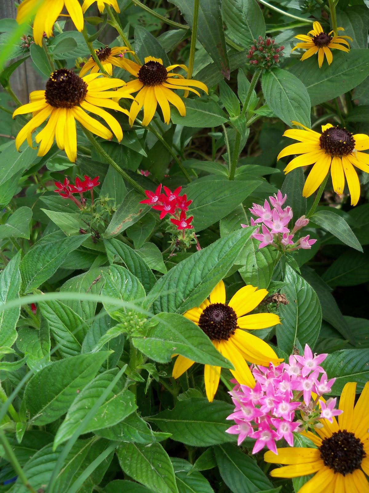 Gardening 2010, Part Three - 101_5311.JPG