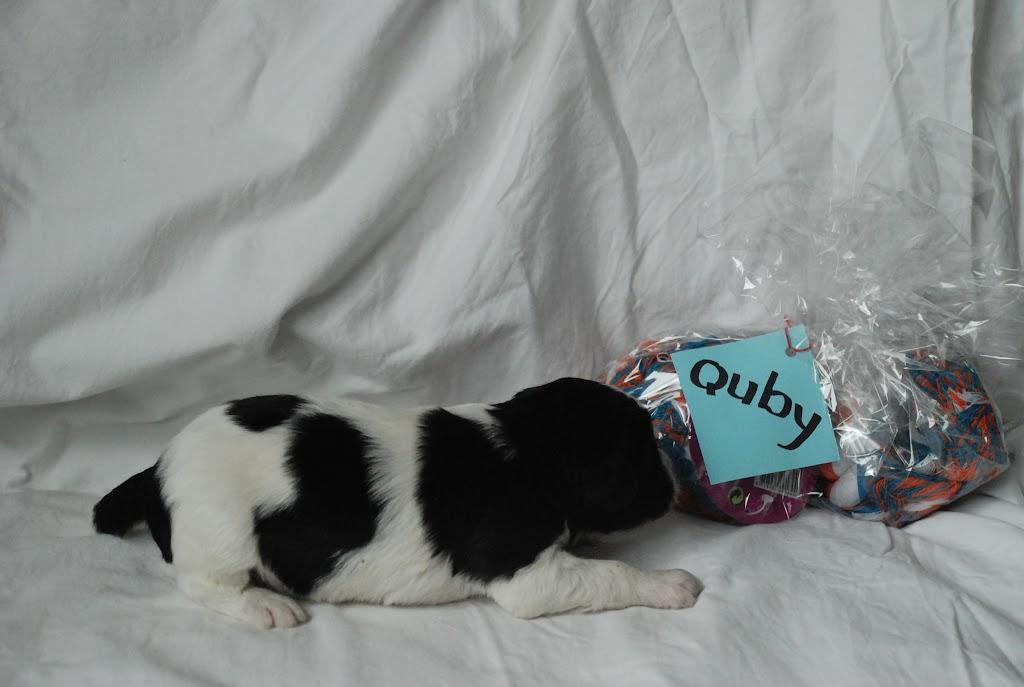 Quby1