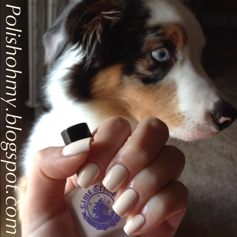 My Miniature Australian Shepherd Puppy 'Cody' & Lime Crime 'Milky Ways'