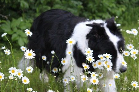 escaping the daisies