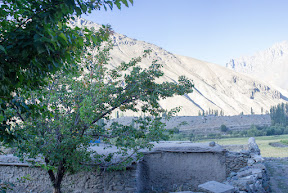 One of the few apricot trees in the village, Golaghmuli, Ghizer