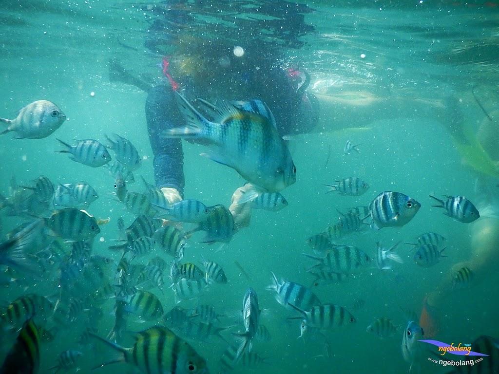 family trip pulau pari 140716 Nikon 33