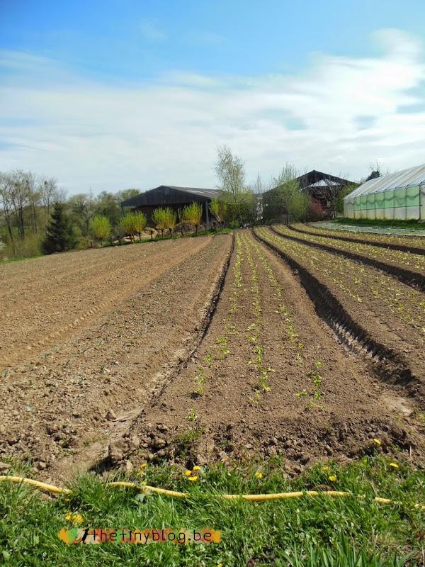 Paniers Verts Organic Crop
