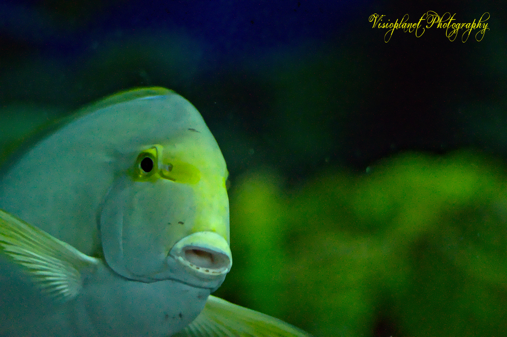 The amazed fish by Sudipto Sarkar on Visioplanet