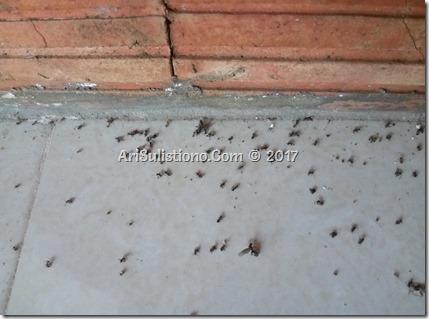 Semut beserta ratunya telah keluar dari sarang dan mati