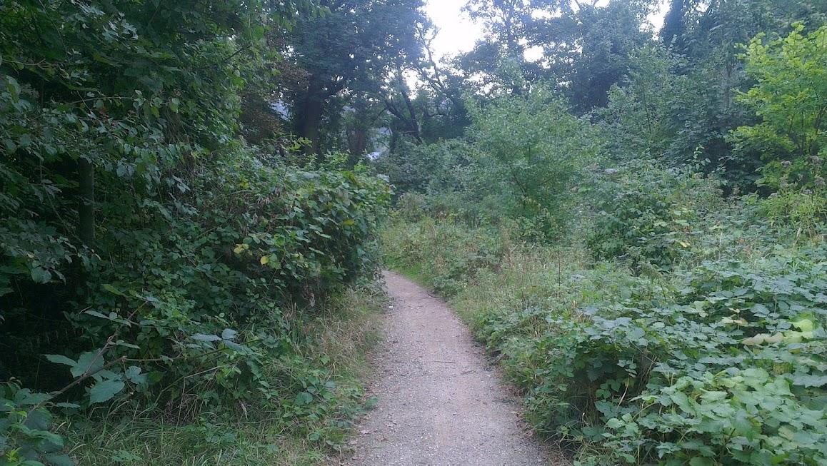 Im Wäldchen zwischen Bienertmühle und Beinertwehr
