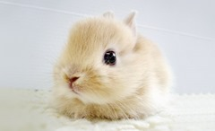 Cute-Rabbit-03 (1)