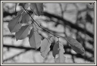 Photo: 218