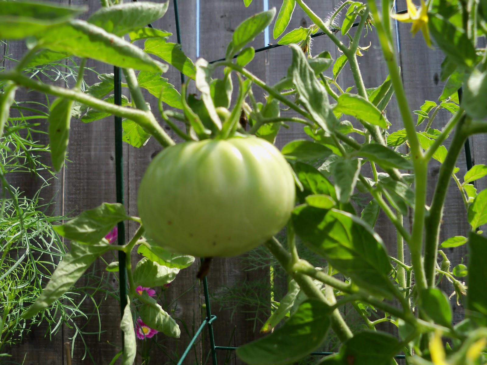 Gardening 2010, Part Two - 101_2712.JPG