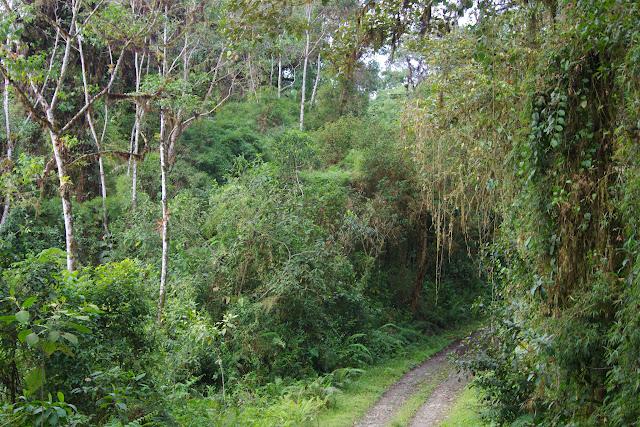 Cloud Forest au-dessus de Nanegalito, Tandayapa, 2000 m (Pichincha, Équateur), 12 décembre 2013. Photo : J.-M. Gayman