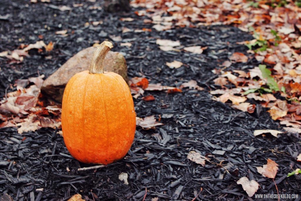 [pumpkin24%5B10%5D]