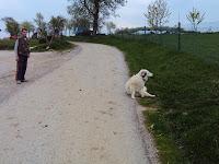 Pes v Gornjakima
