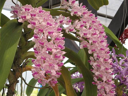 Растения из Тюмени. Краткий обзор - Страница 9 375551564_7f46661c8d