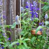 Gardening 2014 - 116_3414.JPG