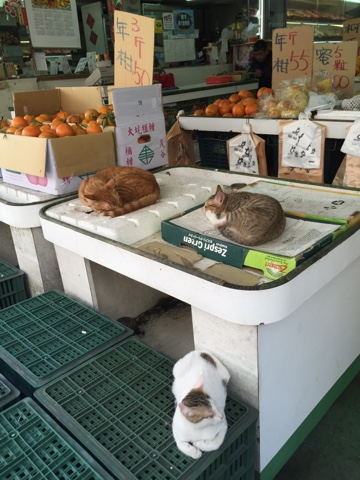 果物屋の猫