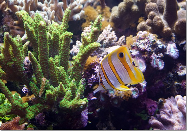 paris aquarium tropicale fish 111115 00003