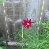 Gardening 2010, Part Two - 101_3287.JPG