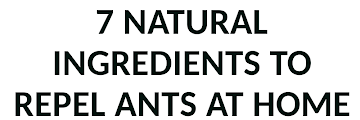 7 Natural Ingredients to Repel Ants at Home