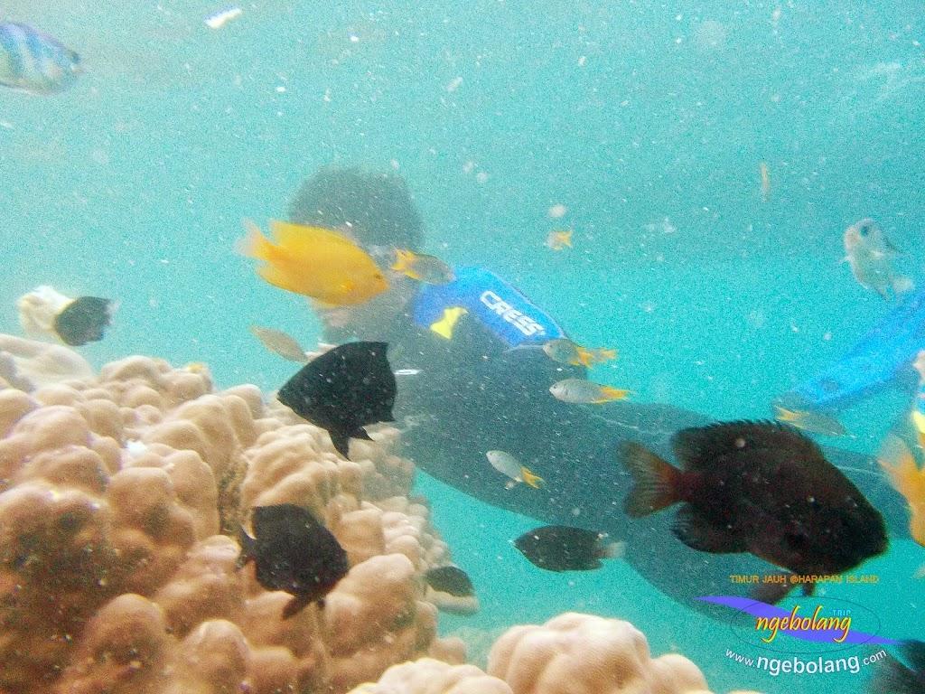 pulau harapan timur jauh 29-30 nov 2014 caklung 22