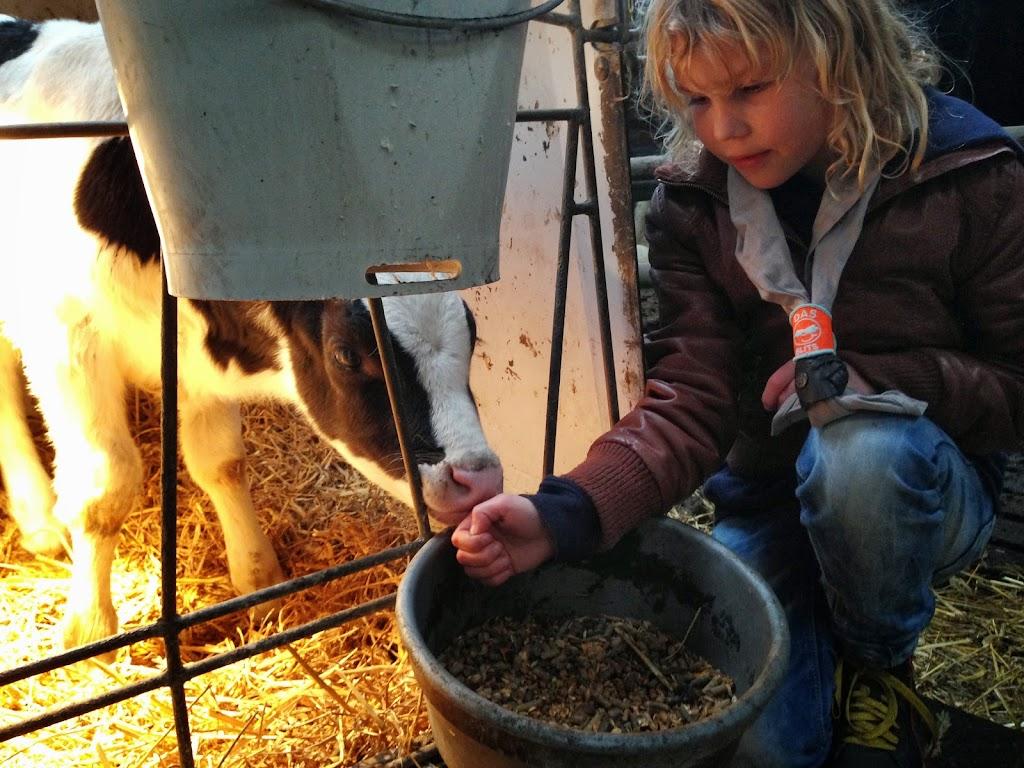 Bevers & Welpen - Boerderij bezoek - 2014-03-22%2B11.15.31.jpg