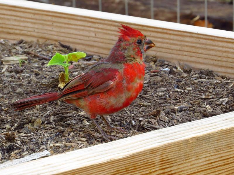 cardinal09252014.jpg