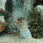 Findin' Nemo