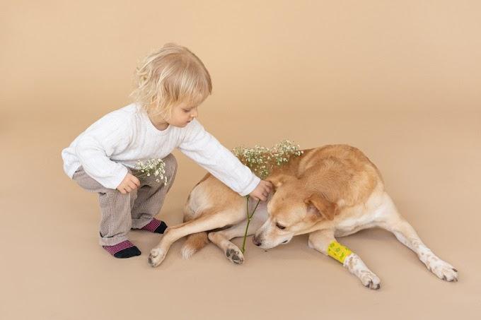 الكلب ليس نجسا عند المالكية